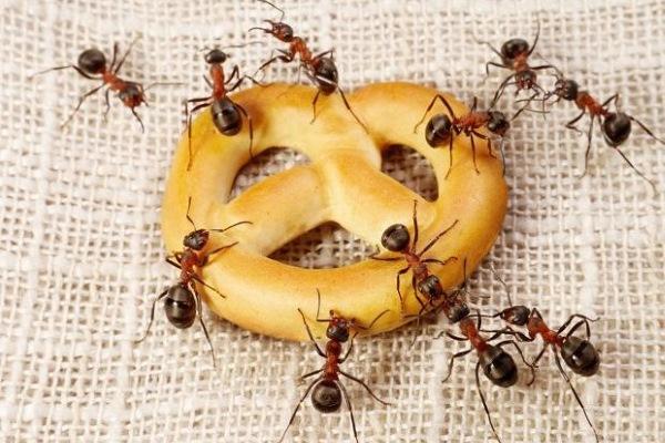 middel mod myrer