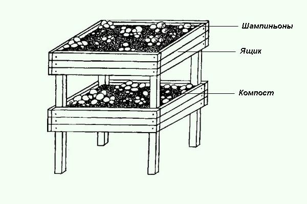 Выращивание шампиньонов в ящиках